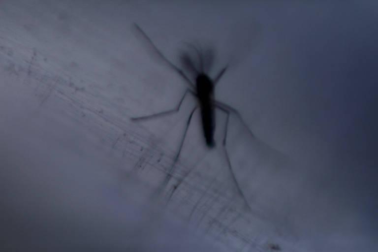 Casos de dengue sobem, e SP pode enfrentar epidemia retardada da doença