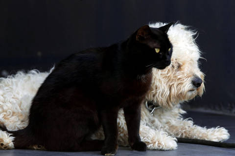A cat named Lucky and a dog named Casper are seen living together in the southern village of Khiam, Lebanon June 3, 2018.REUTERS/ Jamal Saidi ORG XMIT: GGGJS01