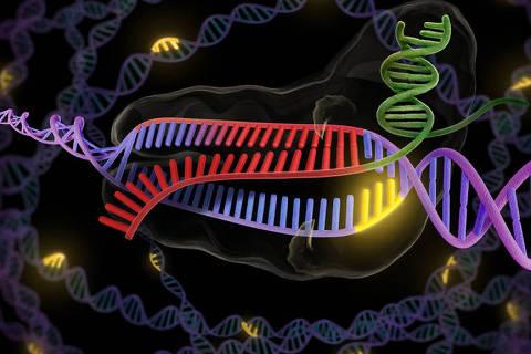 Crispr-cas9, técnica de edição do DNA que pode mudar o mundo da biologia, medicina e agronomia