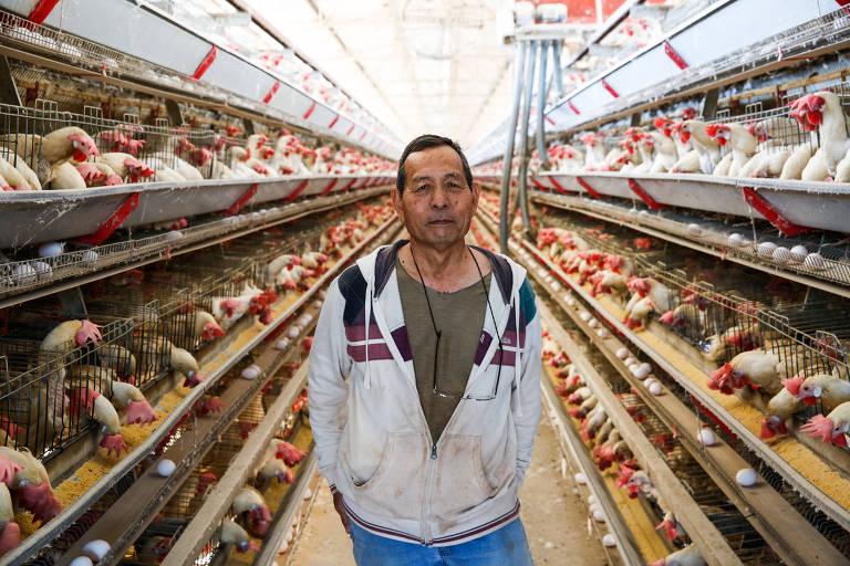 Choichi Saito em pé no barracão de galinhas em sua granja em Guatapará (SP)