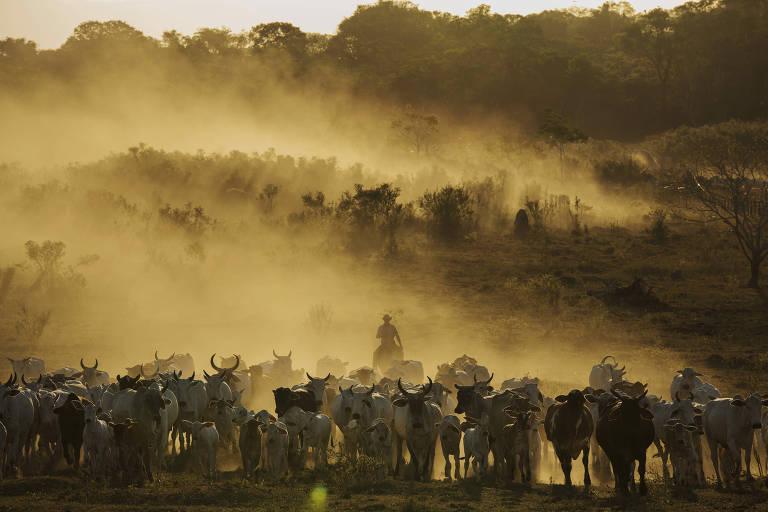 Em cinco anos, produção de carnes de Mato Grosso vai subir 40%, diz banco