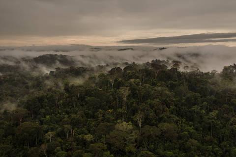 SANTARÉM, PA, 12.06.2017 - Floresta Nacional do Jamanxim, criada em 2006 no governo Lula. (Foto: Avener Prado/Folhapress)