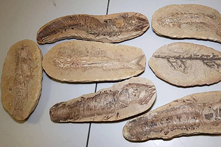 Após prender contrabandista, Colômbia devolve sete fósseis para o Brasil