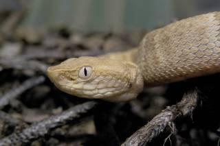 Cientistas reclamam de novas regras para pesquisas com biodiversidade