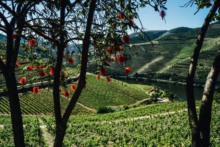 Crise do clima ameaça vinhos portugueses do Douro