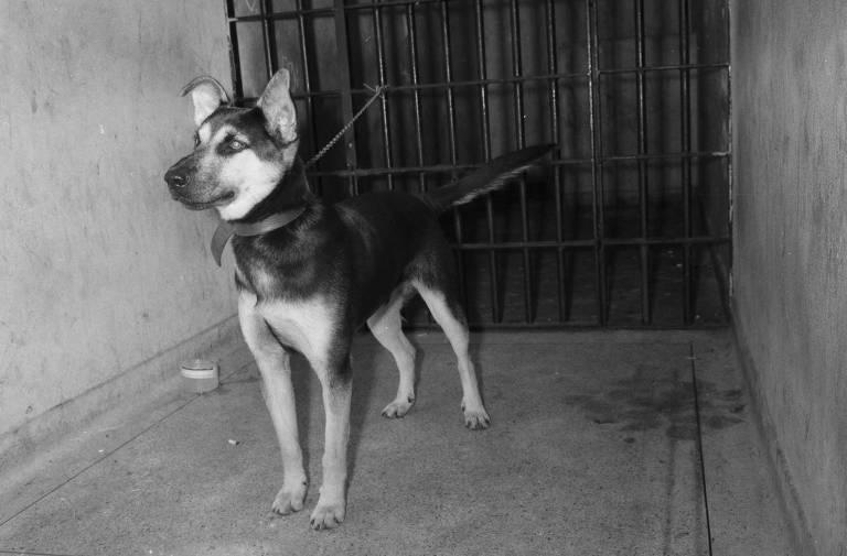 O cão Max