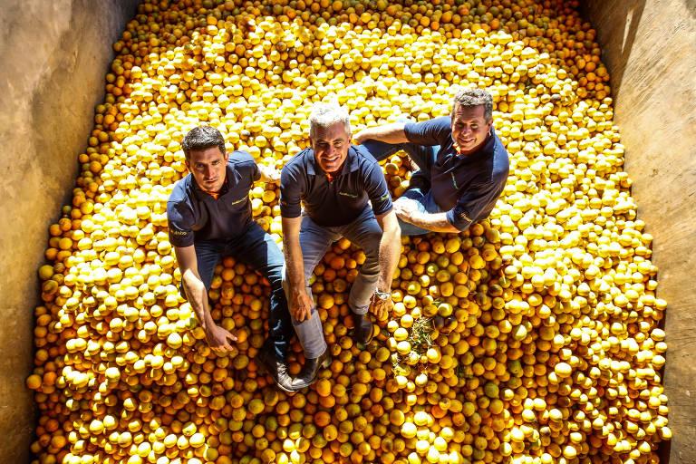 Os três produtores de laranja estão sentados sobre uma montanha de frutas