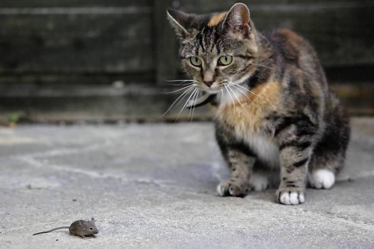 Gato e rato ficam frente a frente