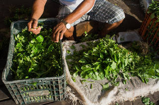 Fair seller selecting the best leaves of jambu (a typical regional herb of amazonian cuisine)