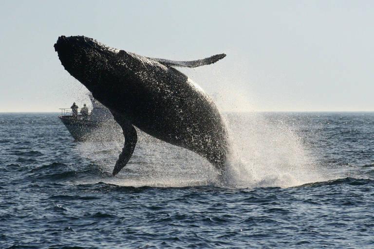 Baleias nas ilhas de San Juan