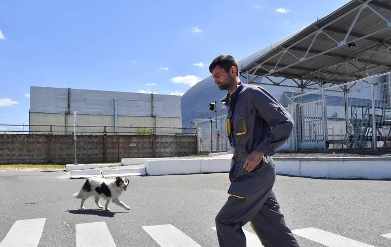 Cães de Chernobyl