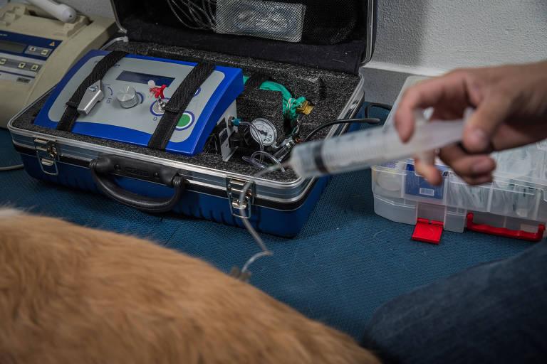 Cachorro em sessão de ozonioterapia