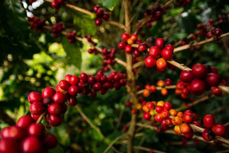 Fazendas de café