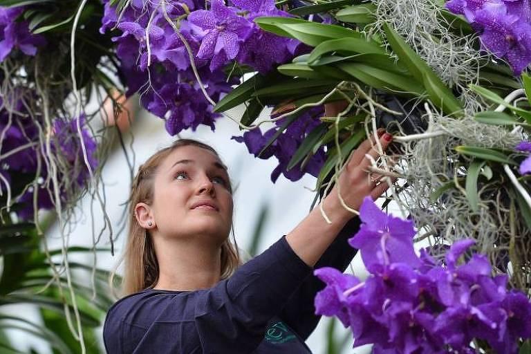 Turismo de Festival de Orquídeas de São Roque