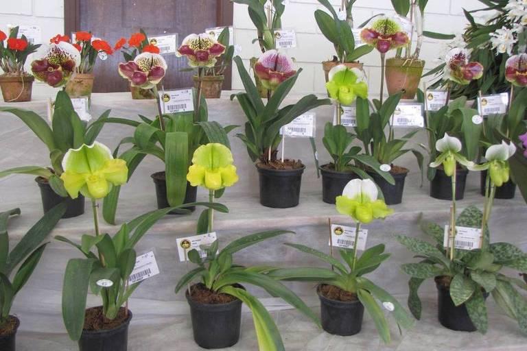 Festival de Orquídeas e Plantas Ornamentais de São Roque apresenta flores típicas da época