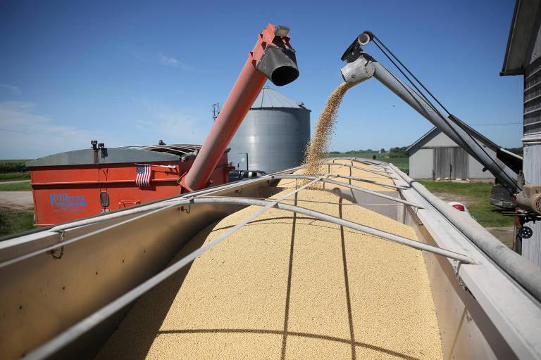 Produção de soja em Buda, Illinois, nos Estados Unidos