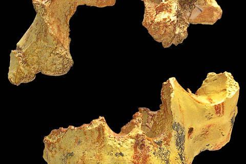 Caveira de Homeo antecessor, encontrada na caverna Gran Dolina, em Atapuerca, na Espanha