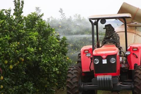 IBITINGA, SP, BRASIL, 22-07-2011, 14h:30. Pulverizacao de inseticida em pomar de laranja na Fazenda Sao Luis em Ibitinga, interior de Sao Paulo. Citricultor participa de um pool de produtores que vao comprar defensivos agrcolas em parceria para combater o greening; periodo e o melhor para aplicacao dos herbicidas. (Foto: Marcia Ribeiro/ Folhapress, REGIONAIS)