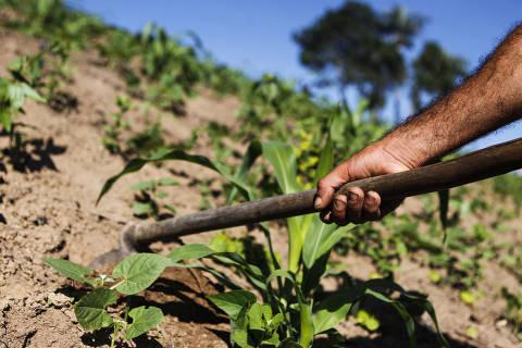 Anvisa adota risco de morte como único critério para classificar agrotóxicos