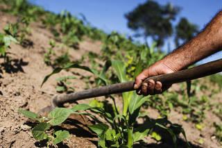 Agricultura - PE