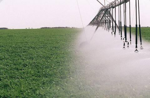 ORG XMIT: 231901_0.tif Plantação irrigada de feijão. (Goiânia, GO, 21.08.1996. Foto de Luiz Carlos Murauskas/Folhapress)