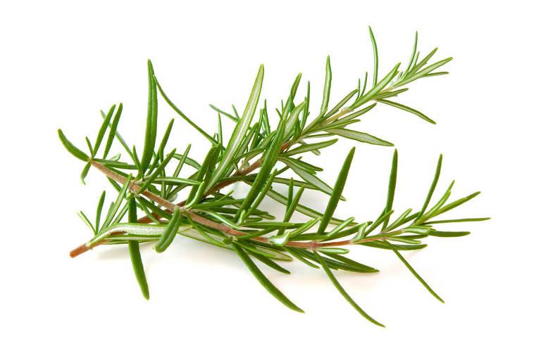 Ervas aromáticas, condimentos e especiarias