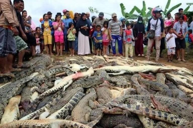 O local onde os animais foram mortos possui licença do governo para criar os crocodilos