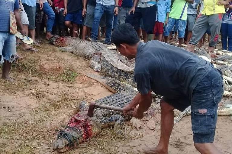 Matança de crocodilos