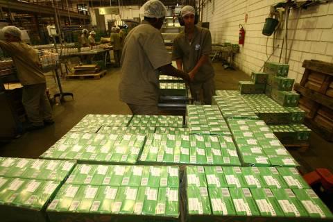 PATROCINIO PAULISTA, SP, BRASIL, 18-09-2012: Linha de produção de leite longa vida da usina de Laticínios Jussara, em Patrocínio Paulista (SP). Estoque está a metade do necessário como margem de segurança.  Estiagem prolongada, que já dura dois meses, fez cair a captação de leite nas fazendas no interior paulista( Foto: (Edson Silva /Folhapress ) ***REGIONAIS***EXCLUSIVO FOLHA***