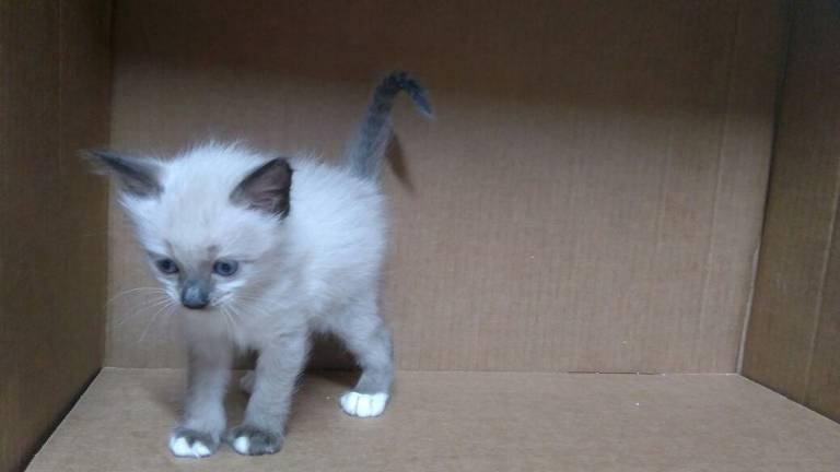 Gatos para adoção na ONG Gatópoles