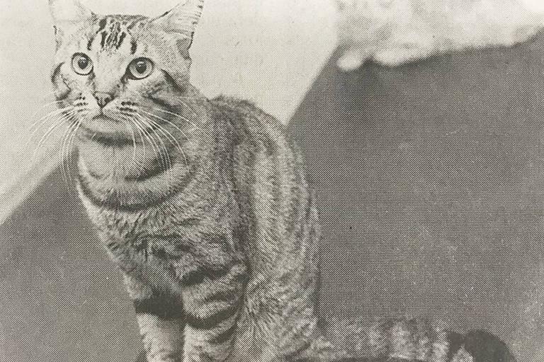 Foto da gata Bolinha, tirada semanas antes do incidente com o microondas