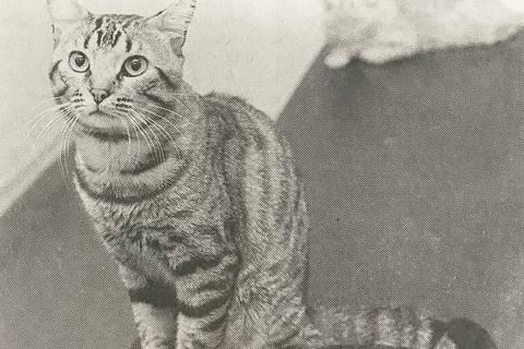 Foto da gata Bolinha tirada semanas antes do incidente com o microondas