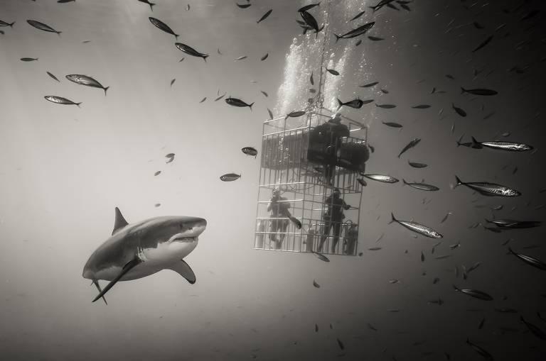Formiga e os tubarões