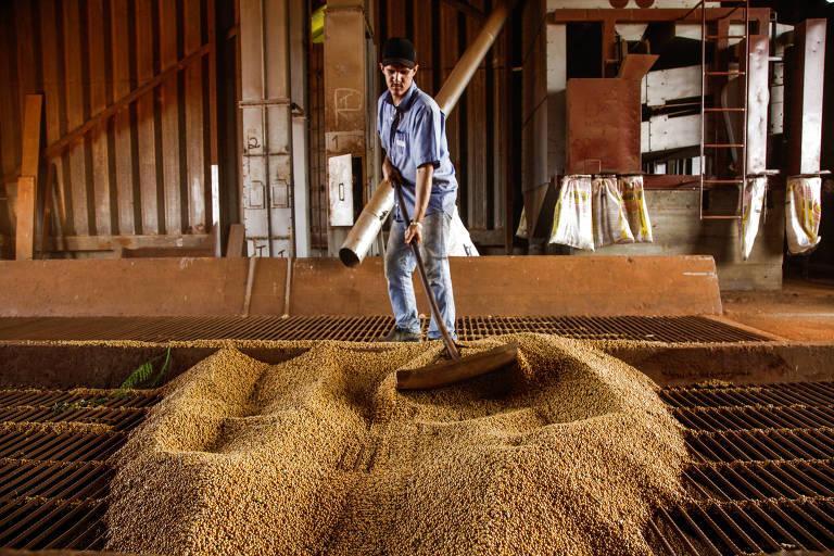Funcionário trabalha em silo da fazenda Lagoa Santa em Guaíra, no interior de SP