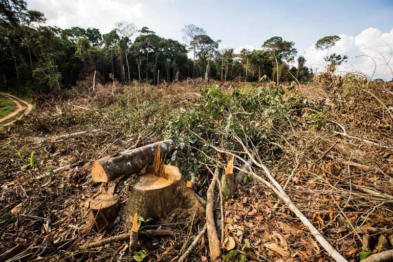 Desmatamento da floresta dentro da reserva Chico Mendes, em Brasilia (AC), em foto de 2014