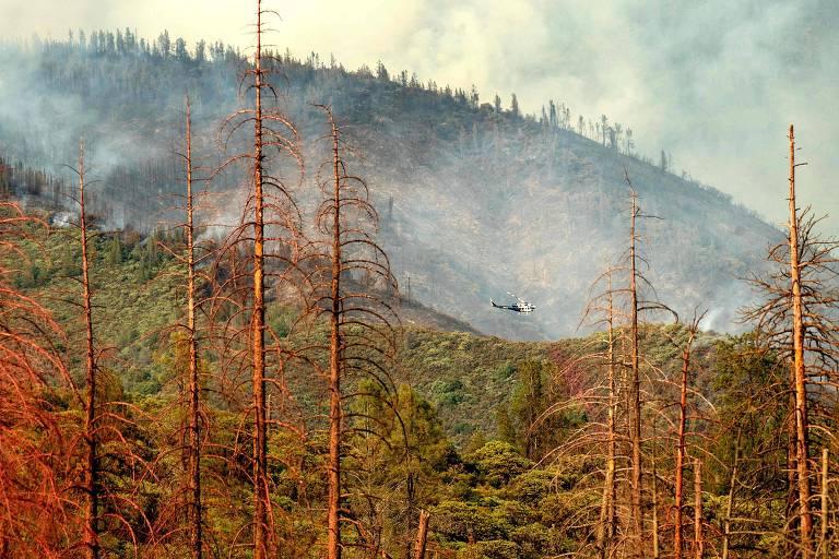 Ao fundo, é possível ver um morro de onde sai muita fumaça com árvores carbonizadas. À frente, uma outra área do mesmo parque de árvores com folhas verdes e tronco marrom avermelhado. Um helicóptero passa no meio da divisão dos dois lados.
