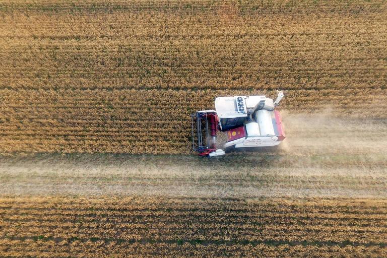 Campo de trigo visto de cima