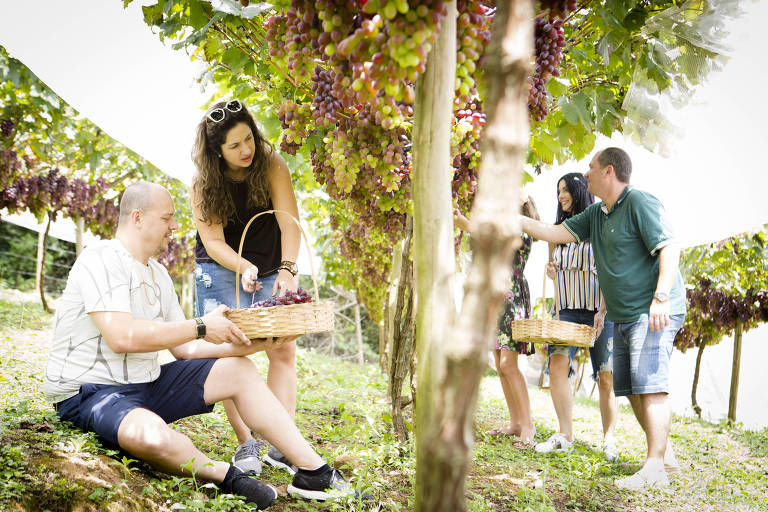 Turismo e vinho de melhor qualidade mudam imagem das casas de São Roque
