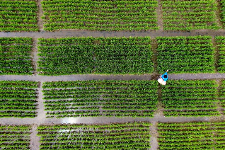 Vista aérea de um agricultor aplicando fertilizante em um instituto de investigación de agricultura, na área de Lixiahe, em Yangzhou, provincia de Jiangsu, ba China