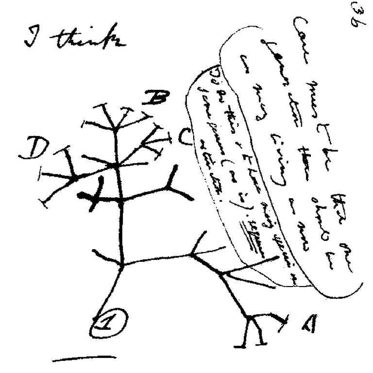 Desenho clássico de Darwin mostrando a ascendência comum