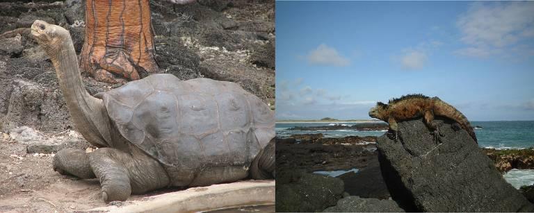 Tartaruga-das-galápagos e iguana das ilhas