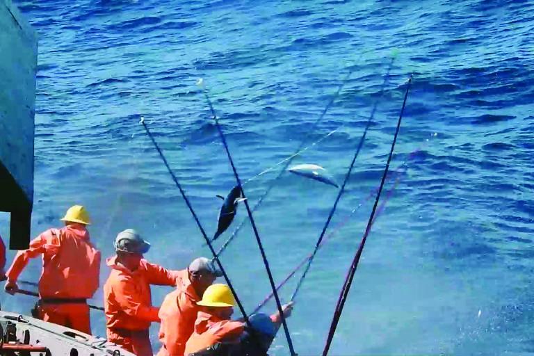 No barco, funcionários pescam atum com vara