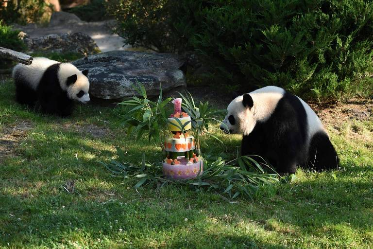 Aniversário do panda Yuan Meng