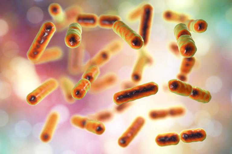 Bacteroides fragilis, uma das bactérias componentes da microbiota do intestino humano (crédito Fotolia)