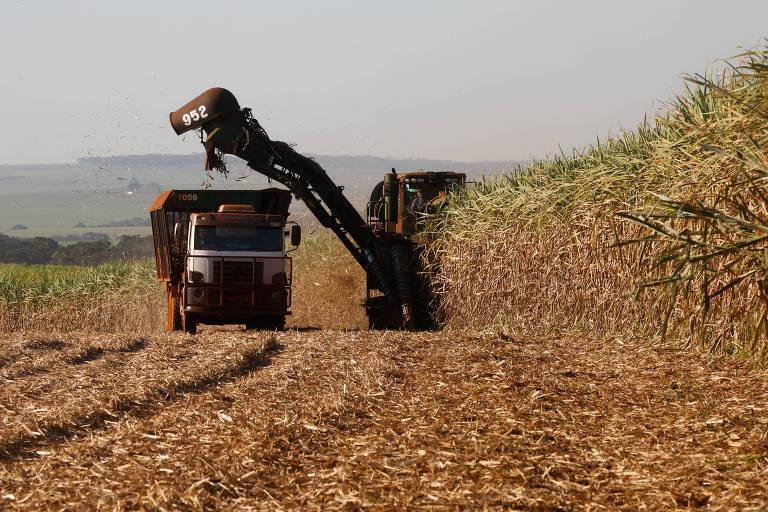 Biosev pode vender usinas no Brasil, afirma agência