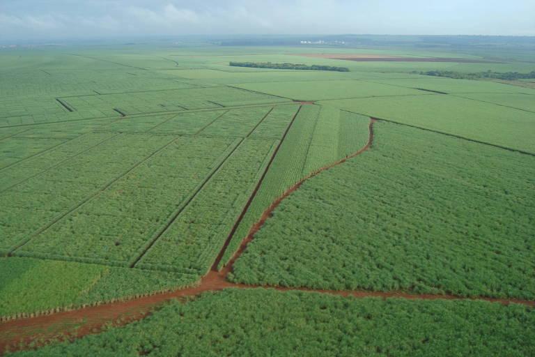 Vista aérea de uma longa área de cultivo de cana-de-açúcar