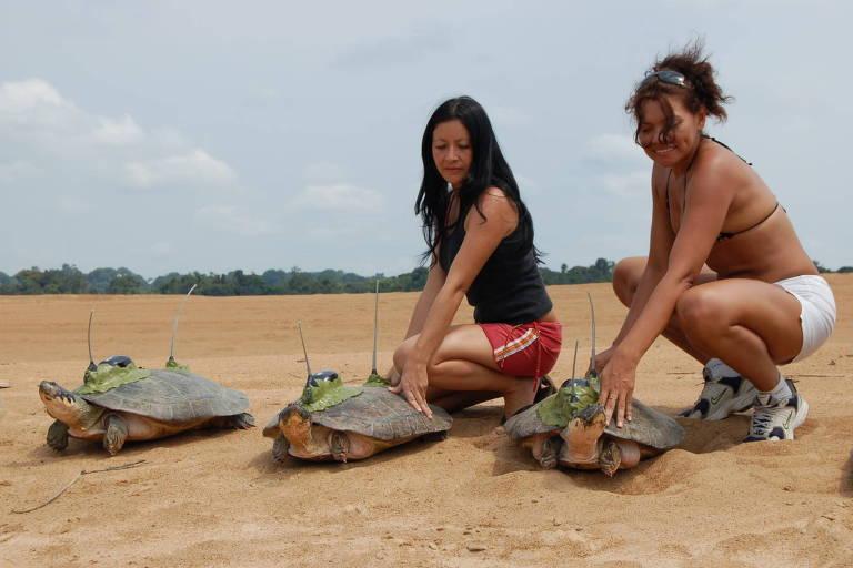 Pesquisadoras do Inpa manuseiam tartarugas durante atividades de campo; foto foi censurada em congresso