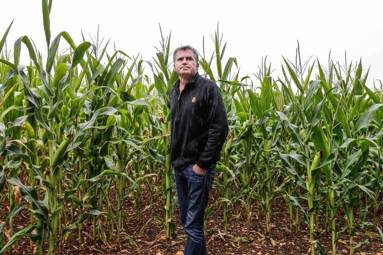 Uso de glifosato na agricultura