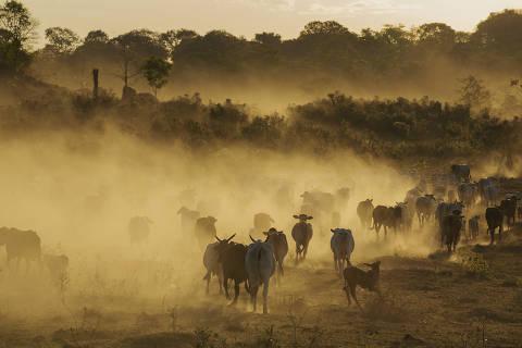 Quase 90% do desmatamento da Amazônia em Mato Grosso nos últimos 12 anos foi ilegal