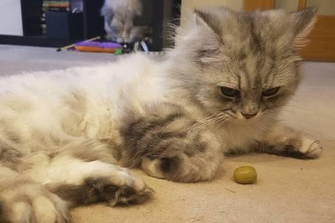 A azeitona tem um composto que pode causar efeito semelhante ao do catnip em gatos